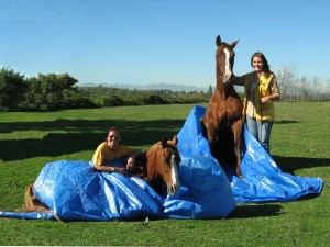 Clearly these tarpaulins do not represent a threat to my horses!