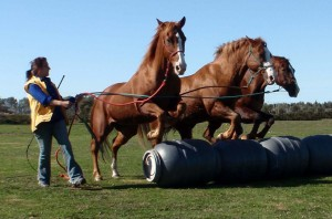 Remember that horses LOVE playing in a group!