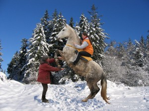 The horse should not hop, but press himself up and balance!