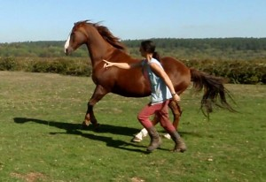 Running parallel is a sign of friendship - horses love it!