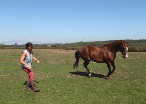 We canter in Sync - body language is clear, horse fully focussed!