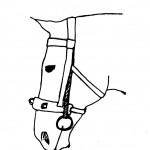 We removed the nose band of the bridle. The nose band of the cavesson is passed under the straps of the bit.