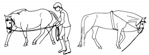 Left you see a natural relaxation posture. On the right the horse finds the way down with running reins.