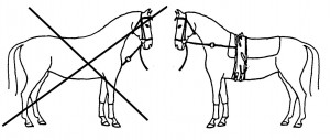 Stoßzügel - straight side-reins - are counter-effective in training. In vaulting competition they are required by the rules.