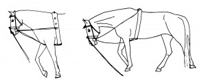 Left: according to Ph. Karl the horse would go against the reins here. Right: the horse finds the way down.