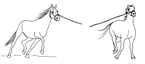 As long as the horse still storms off in canter, go back to walk or trot (right). The horse on the left is unbalanced: his neck turns out, he falls onto the inner shoulder, the hind end swings out. Play other games to teach him better balance!