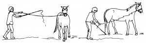 Now practise your body language commands for speeding up and slowing down your horse.