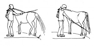"Practise our body language in the ""Teach Stop"" exercise. Make sure the horse squares up each time."