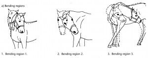 It is important to guide the horse throught the regions correctly. Man muss die Regionen korrekt durchlaufen.