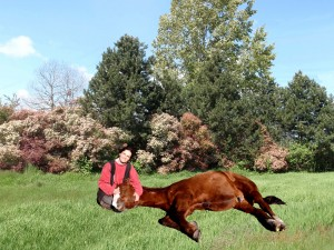 Expression of utmost trust: a horse going to sleep in your lap proves that he believes you are a trustworthy guard!