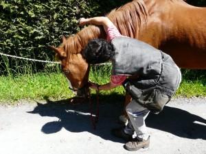 """My horse must slip into the halter willingly - I do not """"catch"""" horses ! Mein Pferd muss freiwillig ins Halter schlüpfen - ich """"fange"""" keine Pferde !"""