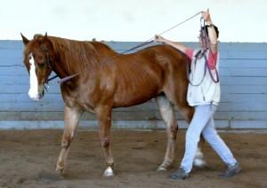 To make my aid quite clear to my horse, I lift AND open my arm to the side for the bend. Um die Hilfe klarer zu gestalten, hebe ich den Zügel für die Biegung an UND öffne den Arm zur Seite.