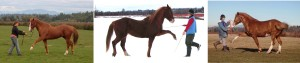 If you want the horse to step with expression, you must move rhythmically and energetically yourself.  By making himself light on the forehand, the horse will tend to collect himself naturally.