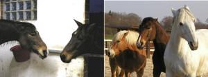 """Ears on the left say: """"Stay clear of my bucket!"""" - but what do the three horses on the right say to each other?? Die Ohren links sagen """"Bleib weg von meinem Eimer!"""" - aber was sagen die drei Pferde rechts zueinander??"""