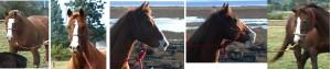 These horses all see something quite exciting! High muscle tone, wide nostrils and tense mouths. Diese Pferde sehen alle etwas wirklich aufregendes! Hoher Muskeltonus, weite Nüstern und angespannte Mäuler.