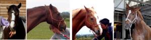 Questioning ears - horses are all at a loss! Reduced eyes and stuck-out tongues are typical. Fragende Ohren - diese Pferde sind alle ratlos! Zurückgenommene Augen und rausgestreckte Zungen sind typisch.