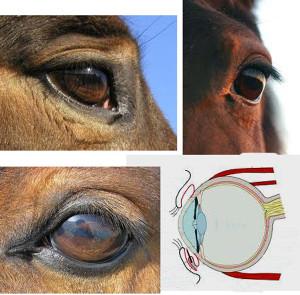 11-EyeCombo