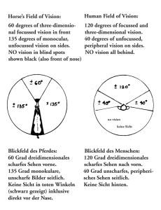 11-FieldVision