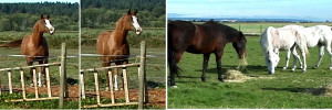 """Left: Frontal stare with challenging body posture - right: ... changes to a """"bite threat"""" if not heeded. Links: Frontales Anstarren mit Imponierhaltung - rechts: ... wird zu einer """"Beißdrohung"""", wenn nicht beachtet."""