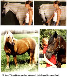 Turning the head toward you means the horse is addressing you - and very often seeking reassurance! Please respond! Wenn das Pferd Ihnen den Kopf zuwendet, spricht es zu Ihnen! Sehr oft braucht es Rückversicherung - antworten Sie!