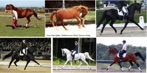 In play as well as under the rider the horse will carry his tail proudly as part of his grace of movement. Im Spiel und unter dem Reiter wird ein Pferd in anmutiger Bewegung stolz seinen Schweif tragen.