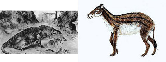 Left: the Mesonyx. On the right a reconstruction of the Hyracotherium, an early form of primeval horse. Links der Mesonyx, rechts eine Rekonstruktion des Hyracotherium, ein Urahne des Pferdes.