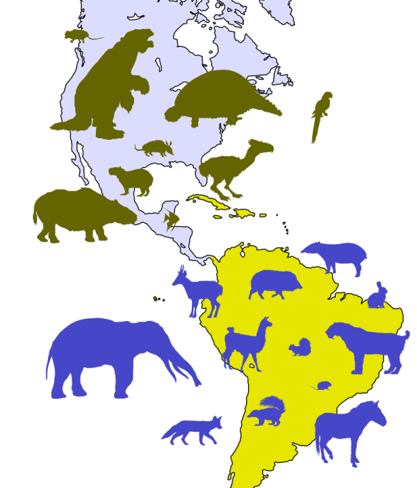 As South America joins the Northern part of the continent for the first time, 16 native genera from the South moved North (shown brown) and 23 moved South (shown blue). Als sich Nord- und Südmaerika zum ersten Mal zusammenschließen, wandern 16 Arten von Süden nach Norden (braun) und 23 Arten Arten von Norden nach Süden (blau).