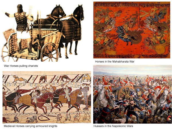 Horses got dragged into war as soon as humans could ride - pulling chariots or being ridden. Pferde wurden in den Krieg gezogen sobald die Menschen reiten konnten - auch als Zugpferde.