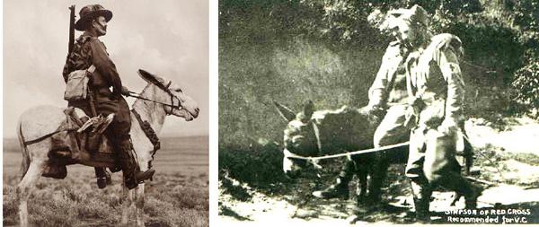 Left: a member of the Zion Mule Corps in Gallipoli - right: a donkey transports an injured soldier for the Red Cross. Links: ein Soldat des Zion Maultier-Corps in Gallipoli  - rechts: ein Esel transportiert einen verletzten Soldaten fürs Rote Kreuz.