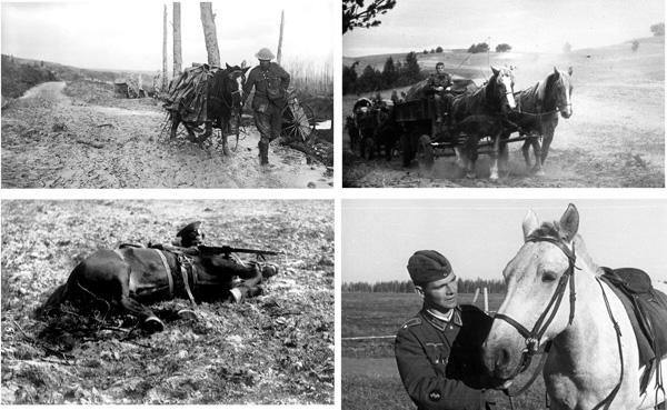 The horse in war was often man's best friend - it gave him somebody to care for. Pferde waren im Krieg oft die besten Freunde der Soldaten - etwas woran man sein Herz hängen konnte.