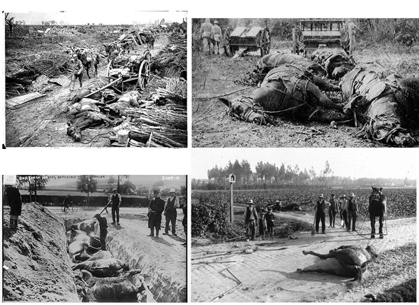 If these pictures shock - so they should! Hundreds of thousands of horses died, many just left to rot where they fell. Wenn diese Bilder schockieren - recht so! Hunderttausende Pferde starben, viele verrotteten wo sie fielen.