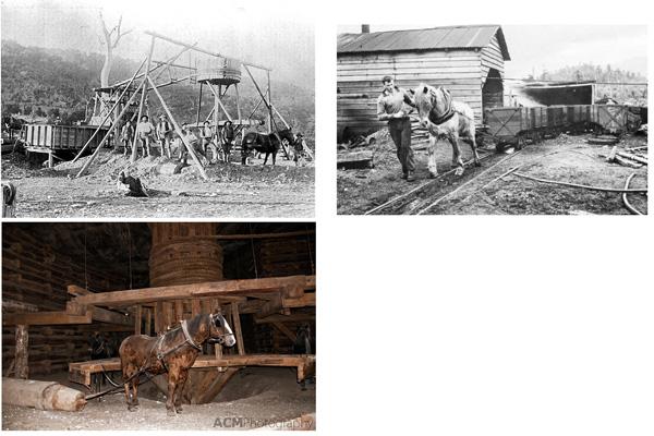 Some horses worked on the surface, operating hoists and dragging lorries. Manche Pferde wurden über Tag eingesetzt zum Drehen der Hebekräne uund Ziehen der Loren.