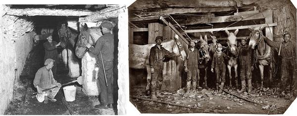 They tried to make the underground stables sanitary - right: 1908 in Pennsylvania child labour was still in full swing! Sie versuchten die unterirdischen Ställe sauber zu halten. Rechts: 1908 war in Pennsylvania die Kinderarbeit noch voll zu Gange!