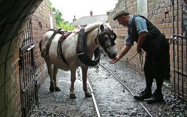 Pip was one of the last pit ponies. He was not underground for long, as the mine closed when he was 5. He lived to a ripe old age of 35. Pip war eines der letzten Bergwerksponies. Er war nicht lange unter Tage, da die Grube geschlossen wurde, als er 5 Jahre alt war. Er wurde 35!