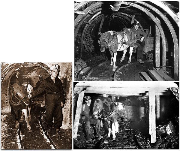 Note the head protection on the animals! Working in the tunnels was very dark and dangerous, and many ponies got injured. Beachtet den Kopfschutz für die Ponies! Die Arbeit in den Schächten war dunkel und gefährlich und viele Pferde wurden verletzt.