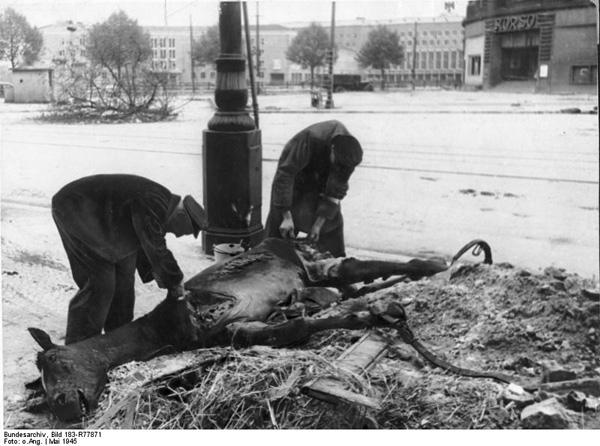 In Berlin 1945 - desperately hungry inhabitants are cutting up a horse cadaver. In Berlin 1945 - verzweifelt hungrige Menschen schlachten einen Pferdekadaver aus.