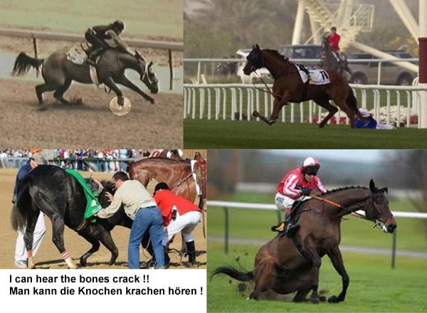 97 % of all injuries on the race track are broken bones and torn ligaments - where is the beauty ? 97 % aller Verletzungen auf der Rennbahn sind gebrochene Knochen und gerissene Bänder - wo ist die Schönheit des Ganzen ?
