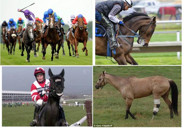 Very many pictures show clearly tht racing is NO FUN for the horses depicted. Viele Bilder zeigen deutlich, daß Rennen für die abgebildeten Pferde KEIN SPASS ist.