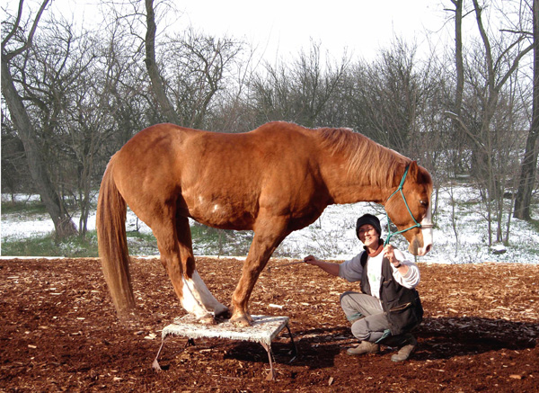 A trusting horse will place his feet exactly as directed by you. Ein vertrauensvolles Pferd plaziert seine Füße genau nach Anleitung.