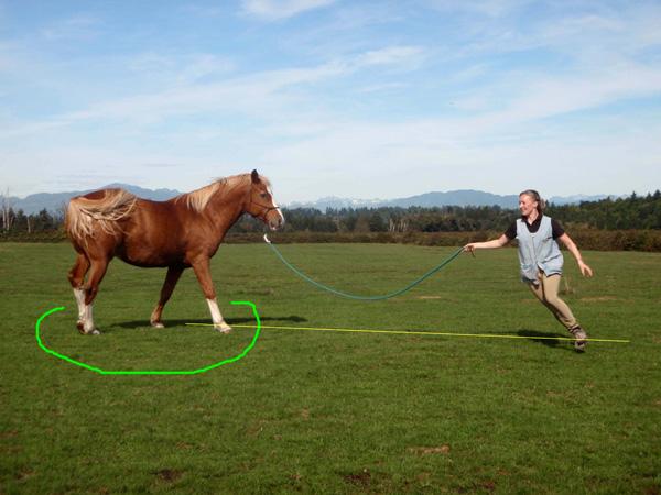 This is the goal! The horse turns on the spot and stays in line with his playmate. Das ist das Ziel! Das Pferd dreht sich auf der Stelle und auf einer Linie mit dem Partner.