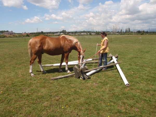 Give the horse the opportunity to inspect the obstacle. Das Pferd muß Gelegenheit haben, das Hindernis zu erforschen.