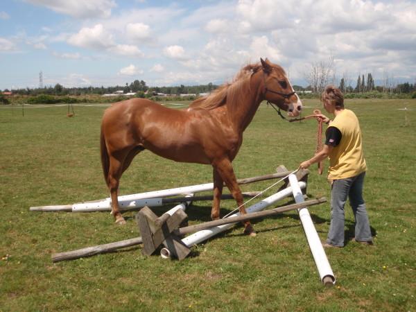 The resting whip tells the horse to stop. Die angelehnte Gerte zeigt dem Pferd, daß es stoppen kann.