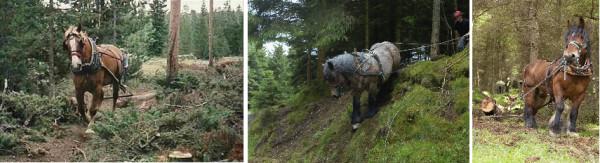 6-loggingcombo