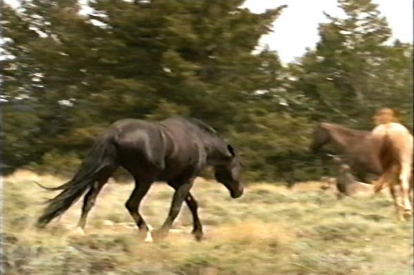 In the wild the horse must constantly make intelligent decisions. In der Wildnis muss das Pferd ständig intelligente Entscheidungen treffen.