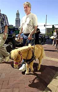 photograph from www.guidehorse.com