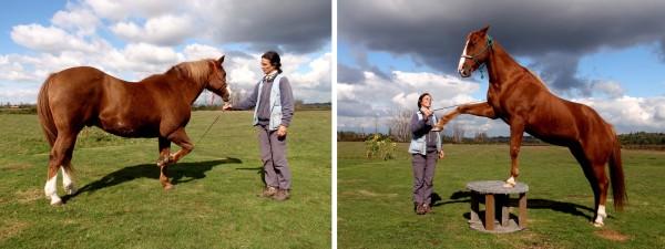 frische luzerne für pferde