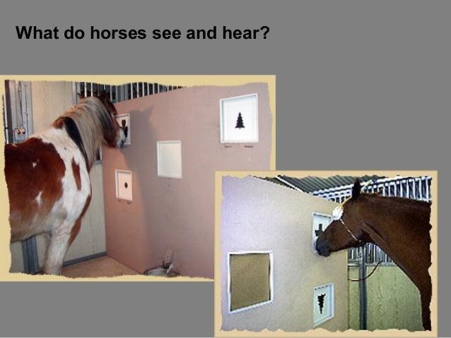 Check the Internet for the interesting set-ups of the experiments! Schauen Sie im Internet nach den interessanten Versuchsaufbauten mit Pferden!
