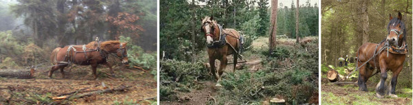 Logging horses often have to work at a distance from the handler and can retain up to 27 voice commands. Rückepferde müssen oft auf Distanz vom Trainer arbeiten und können bis zu 27 Stimmkommandos lernen.
