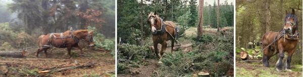 Logging horses often have to work at a distance from the handler and can retain up to 27 voice commands. Rückepferde müssen oft auf Distanz vom Trainer arbeiten und können bis zu 27 Stimmkommandos lernen.