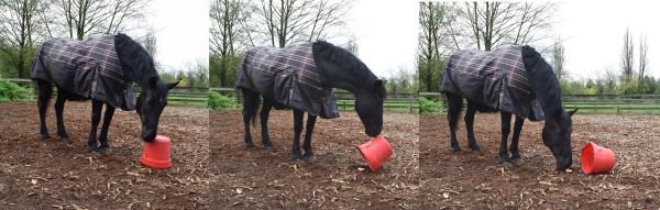 Lola has NO problem remembering that I hid an apple under the bucket a while ago! Lola hat KEIN Problem sich zu erinnern, dass ich vor einiger Zeit einen Apfel unter dem Eimer versteckt habe!